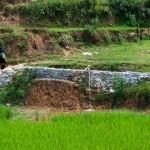 http://www.federicavairani.com/files/gimgs/th-62_vietnam2011_dsc3206.jpg